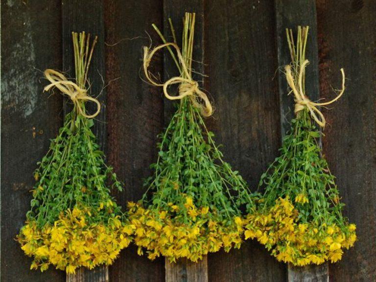 травы от порчи