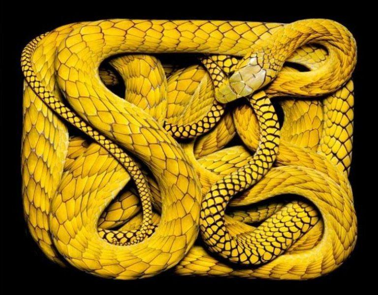 тотем змея