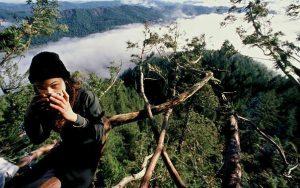 защита деревьев
