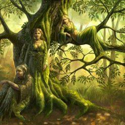деревья ведьм