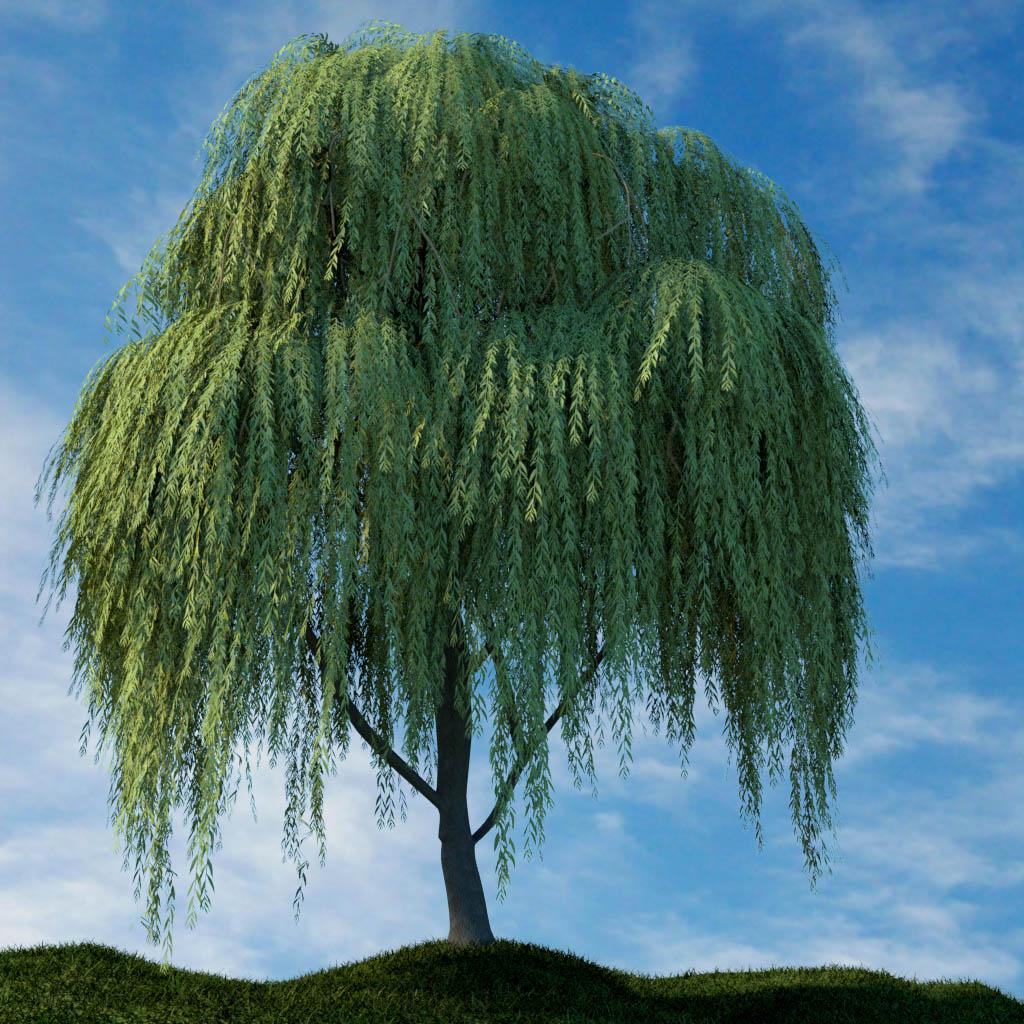 ива магия дерева