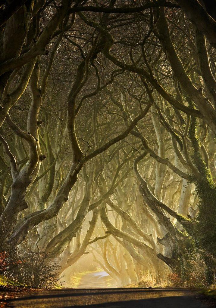 магия деревьев заговоры