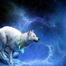 медитация тотем волка